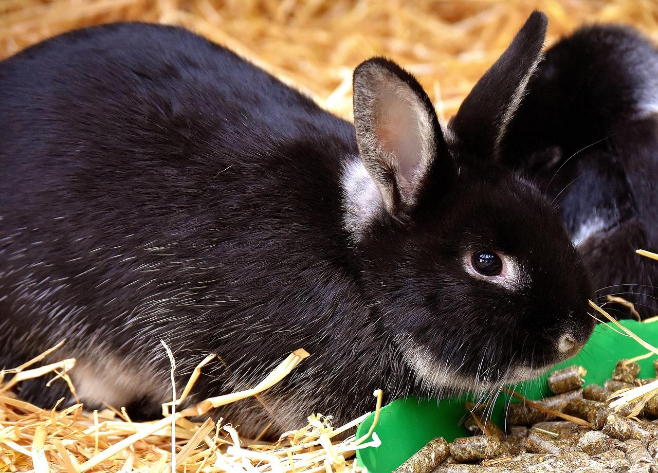 Krankheiten Kaninchen