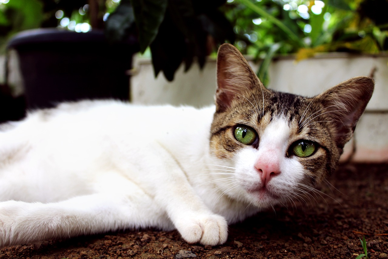 Krankheiten Katze