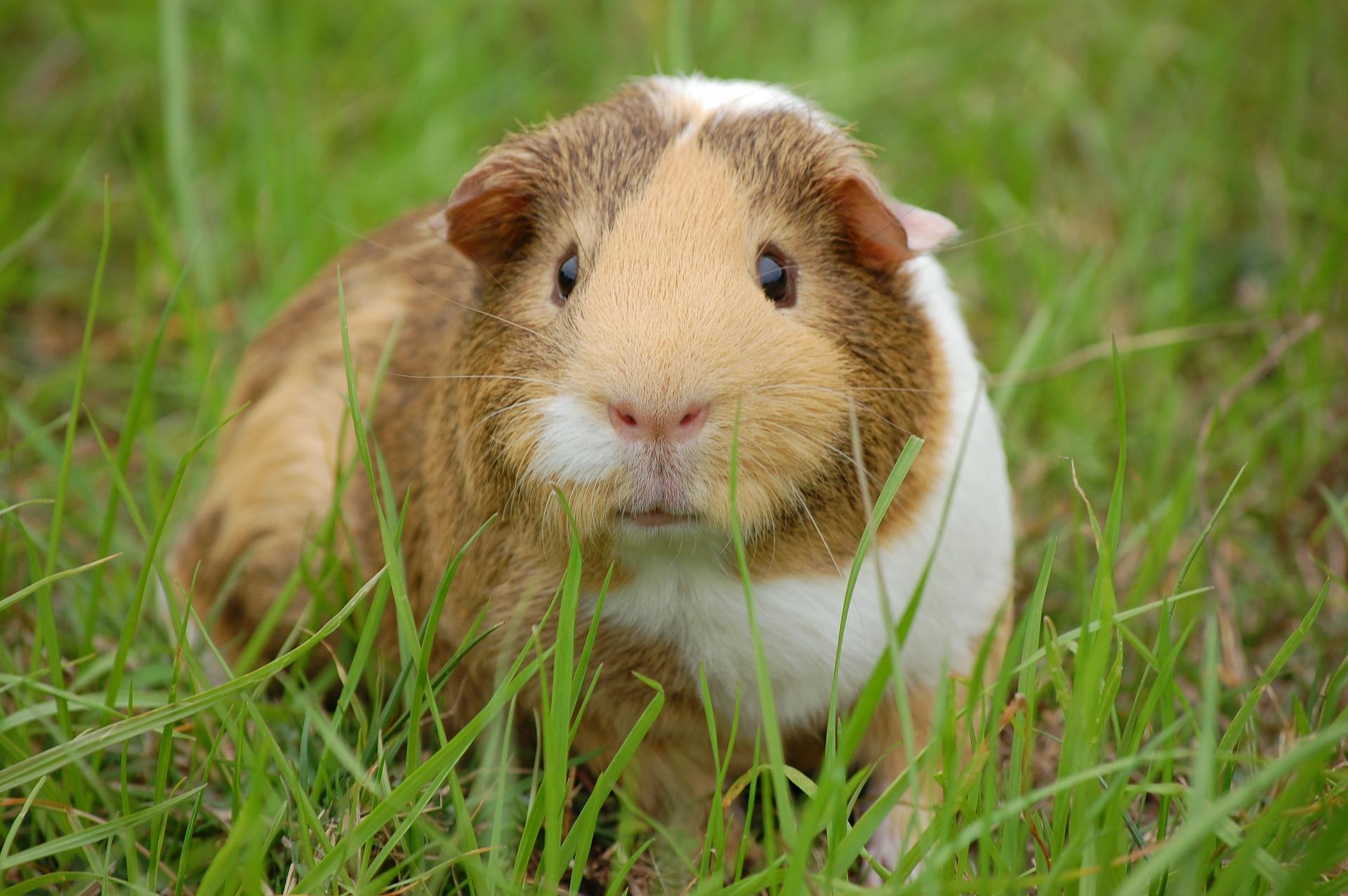 Krankheiten Kleintiere