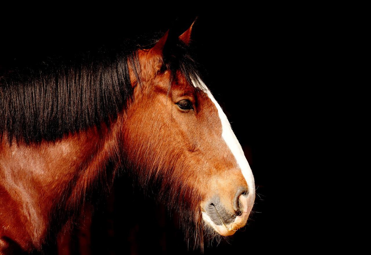 Krankheiten Pferd