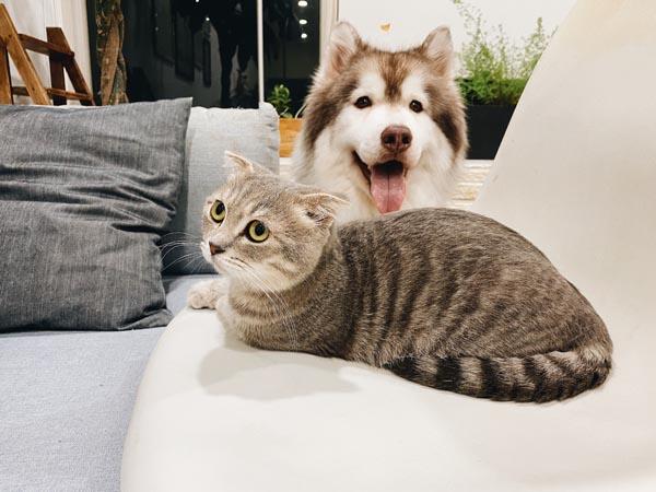 Tierkrankenversicherungen gibt es für Hunde und Katzen